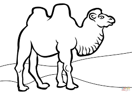 Small Picture Download Coloring Pages Camel Coloring Page Camel Coloring Page