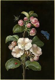 a sprig of apple blossom with various insects colour on a black background the vintage ilration artbotanical