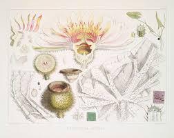 What Is Botanical Illustration Botanical Art Artists
