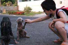 An Inspirational 9 Year Old Builds An Animal Shelter For The Animals