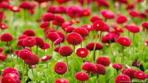wallpaper desktop widescreen flowers. Fine Flowers Wide  With Wallpaper Desktop Widescreen Flowers L