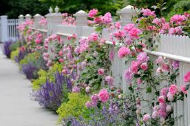 garden fence designs. Fine Fence White Fence With Roses Throughout Garden Designs