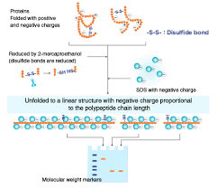 the principle and method of sds