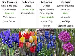 garden bulbs. Bloom Times- Use Varieties With Various Times To Have A Continuous Blooming Garden. Vary Weather Conditions But The Flowers Will Garden Bulbs H
