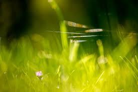12 Beautiful Green Grass Field HD Wallpapers