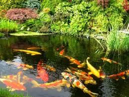 Водные растения для пруда всё про растения пресных водоемов Как правильно устроить разведение рыбы в искусственных водоемах