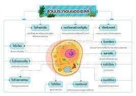 ส่วนประกอบของเซลล์