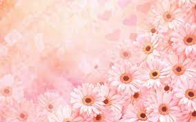 Pink Daisy Wallpapers - 4k, HD Pink ...