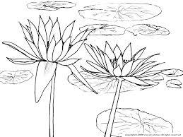 睡蓮の下絵夏の花のぬりえ