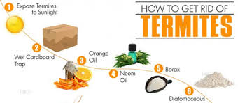 How to Get Rid of Termites: 7 Ways to Get Rid of Termites
