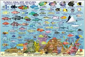 florida fish chart florida state fish card frankos fabulous maps of favorite places