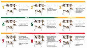 Dog Weight Chart Dog Weight Chart Best Dog 2017