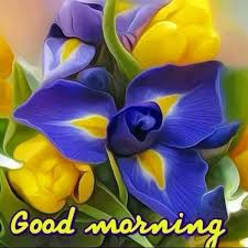 good morning images with flower free