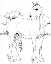 Disegno Di Cavallo Arabo Da Colorare Disegni Da Colorare E
