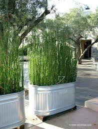 garden privacy screen huge buckets with tall grass garden privacy screens ireland garden privacy screen