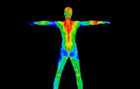 """Résultat de recherche d'images pour """"le corps humain"""""""