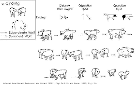 Wolf Body Language Chart Hyperwolf Glossary