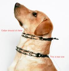 the correct and incorrect way of fitting a g collar