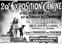 """Résultat de recherche d'images pour """"première expositions canines"""""""