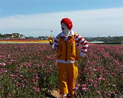 head to the carlsbad flower fields this weekend for face painting ballooning and arts crafts demonstrations for the kids this sunday