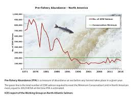 Atlantic Salmon Size Chart The Number Of Atlantic Salmon Returning To N E Canada