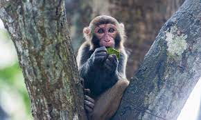 China first human infection case with Monkey B Virus dies of the virus -  Global Times
