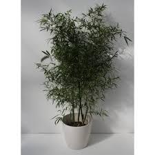 <b>Bamboo</b>, <b>180</b> - 200 cm - SCHEI_0016 | MEDICA 2019