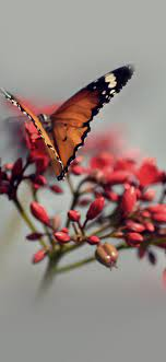 mo08-nature-butterfly-flower-red
