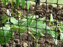 bird netting for garden. plastic net fence 1m x 25m garden crop pond vegetable protection -bird netting, fruit cages, barrier: amazon.co.uk: \u0026 outdoors bird netting for