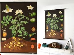 Vintage School Pull Down Charts Reserved Vintage School Pull Down Chart Map Potato Flower