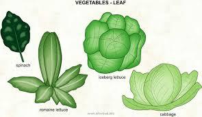 Vegetables Leaf Visual Dictionary