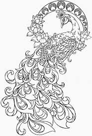 Realistic peacock coloring pages free coloring page printable by sherry