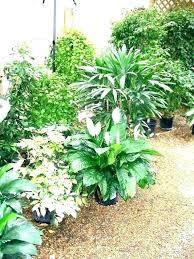 home depot outdoor plants home depot outdoor plants outdoor winter plants for pots outdoor winter plants home depot