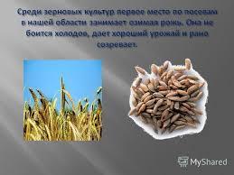 Презентация на тему Доклад на тему Культурные растения нашего  5 Среди