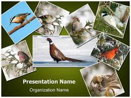 photo collage template powerpoint ornithology collage powerpoint template is one of the best