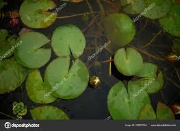 Lilybud Gardens By Design Plants In The Garden Pond Decorative Garden Design Stock