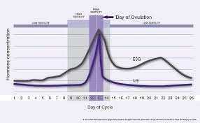 24 Day Menstrual Cycle Chart E3g And Lh During The Menstrual Cycle Fertility Monitor