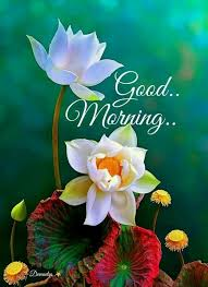 Good Morning Quote 49 Best Good Morning Flower Quote Good Morning Morning Quotes Good Morning