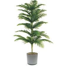 tall office plants. 18 best large indoor plants for home tall office