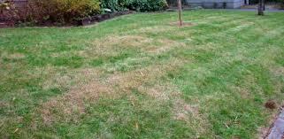 brown spots on grass from fertilizer burn