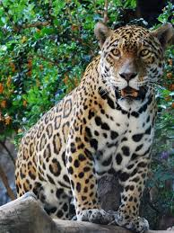 live jungle animals. Contemporary Live Pictures Of Animals That Live In A Jungle Slideshow Inside