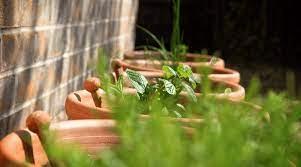 how to start an herb garden a tutorial