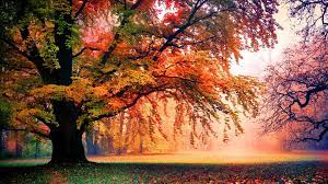 Autumn Tree Wallpapers HD Background