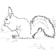 Flying Squirrel Coloring Page Cute Squirrel Coloring Page Flying