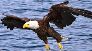 eagle pictures for kids