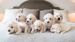 most beautiful puppies in the world. To Most Beautiful Puppies In The World
