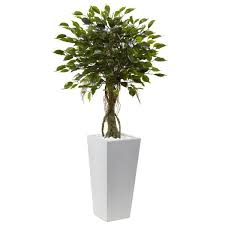 ficus tree with white planter uv resistant indoor outdoor