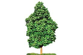 office tree. National Symbols Office Tree