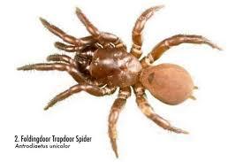 Spiders Of Alabama 58 Spiders You Should Know Al Com