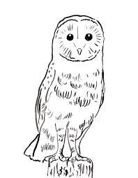 Barn Owl Coloring Page Samantha Bell
